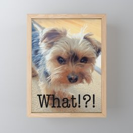 Yorkie | Dogs | Terrier | Pets | Humor | What!?! (with text) Framed Mini Art Print
