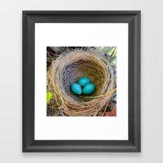 Three Little Robin's Eggs Framed Art Print
