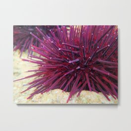 Crimson Sea Urchin Metal Print