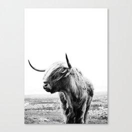 Highland Cow Art Canvas Print