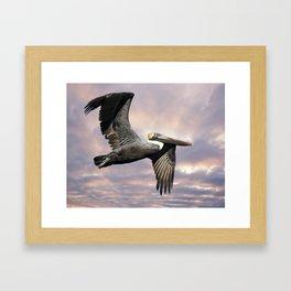 Pelican in flight Framed Art Print