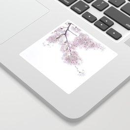 Cherry blossom sakura of Tokyo in Japan Sticker