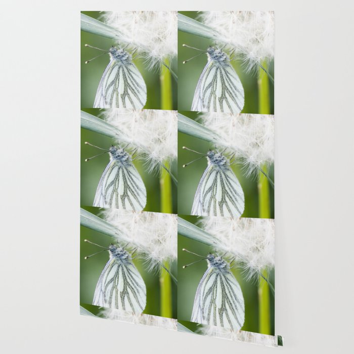 Butterfly dandelion Wallpaper