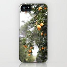 Ojai Oranges iPhone Case