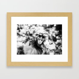 Monkey Pucker Framed Art Print