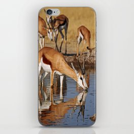Drinking Springbok - Africa wildlife iPhone Skin
