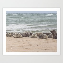 Cape Cod seals Art Print