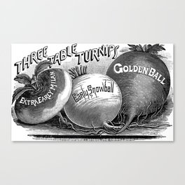 Three Table Turnips 1894 Canvas Print