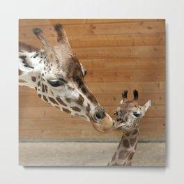 Giraffe 002 Metal Print