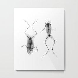 Black and White Frog X-Ray Print, Marine Life Art, Modern Art Print, Square Print, Home Decor, Minimalist Art Print Metal Print