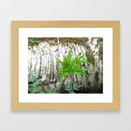 Birch with Greenery Framed Art Print