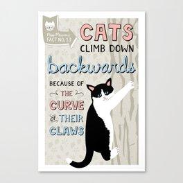 Cats Climb DOWN Backwards Canvas Print