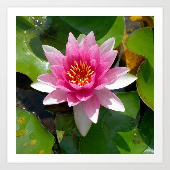 water lily VI Art Print