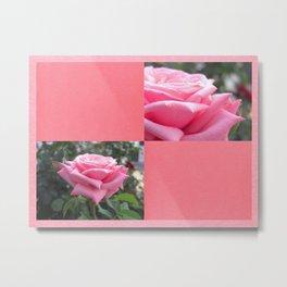 Pink Roses in Anzures 6 Blank Q11F0 Metal Print
