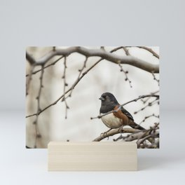 Spotted Towhee Mini Art Print