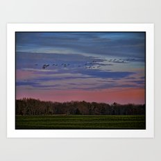 Geese Flying Over The Turf Farm Art Print