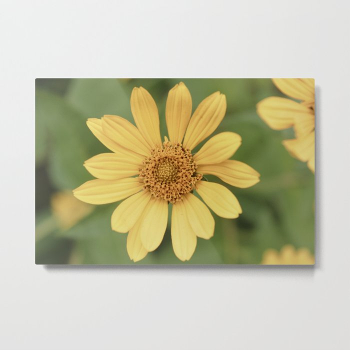 Beautiful Yellow Vintage Flower Metal Print