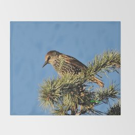 O My Starling, Clementine! Throw Blanket