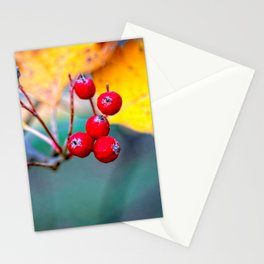 Stylish Hawthorn Berries In Autumn Stationery Cards