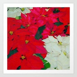 Poinsettias, Olbrich, 5345 Art Print