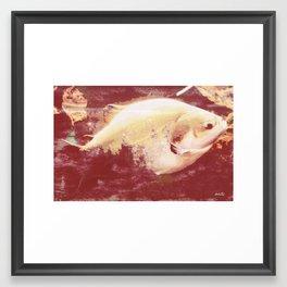 A big fish... literally Framed Art Print