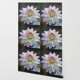 Colorful Dahlia Flower Bloom Wallpaper