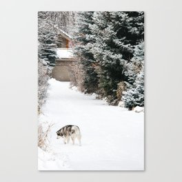 Exploring Husky Canvas Print