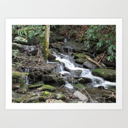 Trickles in the Woods Art Print