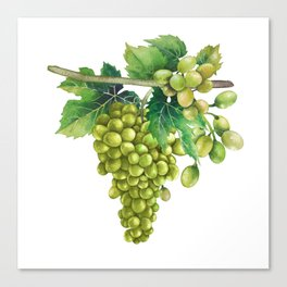 Watercolor bunches of white grapes hanging on the branch Canvas Print