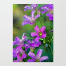 Floral Clover Canvas Print
