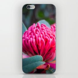 Gorgeous Waratah -Floral emblem of New South Wales iPhone Skin