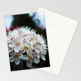Cedar Point Floral Stationery Cards