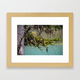 Larch Framed Art Print