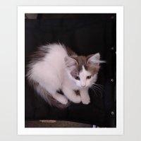 Kitten in a Chair Art Print