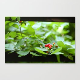 Reaching for Life Canvas Print