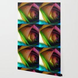 Rainbow Rose 18 Wallpaper