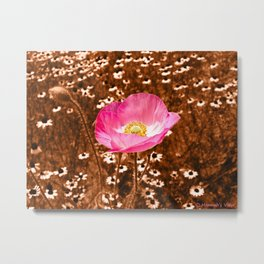 A Poppy Among the Daisies  Metal Print