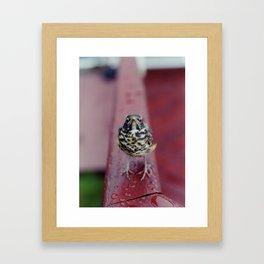 Cheep! Framed Art Print