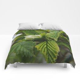 Spring Pops Comforters