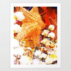 Sea Shells Print Art Print