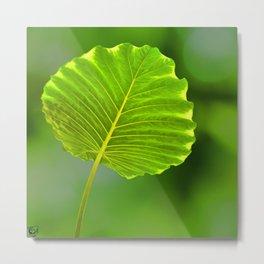 Bokeh Leaf Metal Print