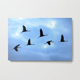 Welcome back! Cranes in flight #decor #society6 Metal Print