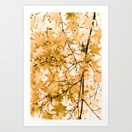 Japanese Maple Tree Acer Palmatum Art Print
