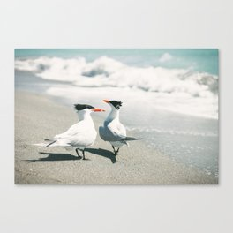 Gulls by the Shore Canvas Print