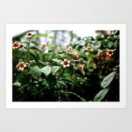 Flower heads Art Print