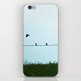 Birds | Uccelli iPhone Skin