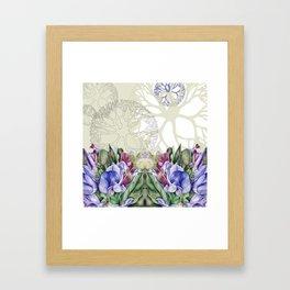 Lathyrus 4 Framed Art Print