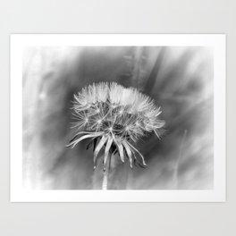 Tick Tock Dandelion Clock Art Print