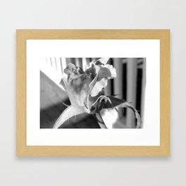 Bud Framed Art Print