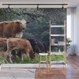 Cows Wall Mural